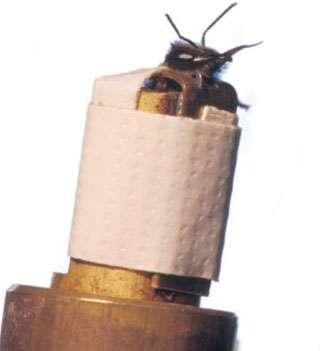Une abeille ayant appris qu'une odeur est suivie d'une récompense sucrée tire la langue (le proboscis) à la présentation de l'odeur elle-même.© E. Perrin/CNRS Photothèque