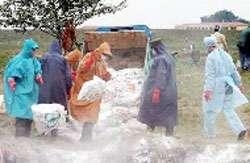 L'OMS recommande des mesures de prévention pour les populations exposées aux virus grippaux aviaires. © www.h5n1-info.com