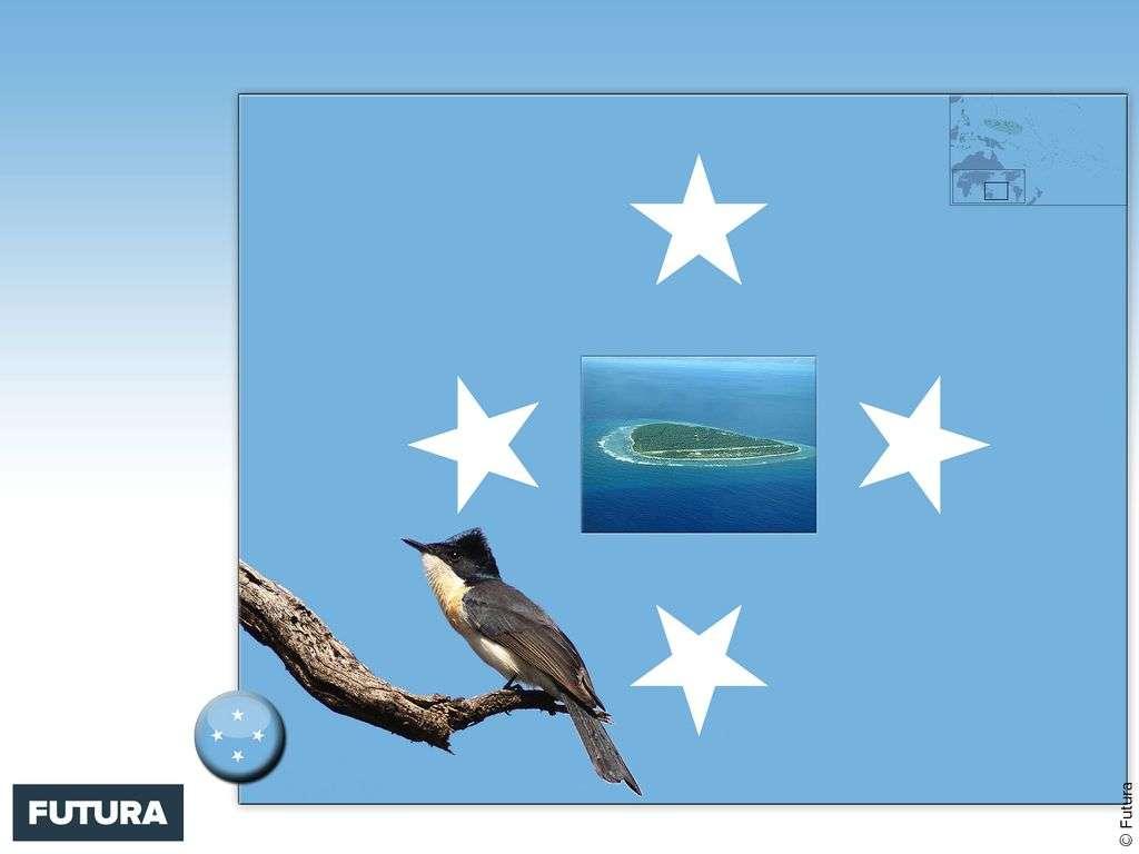 Drapeau : Micronésie