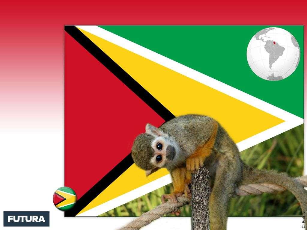 Drapeau : Guyana