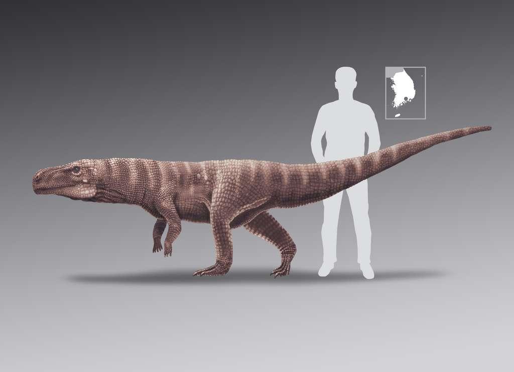 Une comparaison entre la taille d'un des crocodiles et celle d'un homme. L'aspect du crocodile est assez spéculatif. En haut à droite, la région de la Corée du Sud où a été trouvée la piste de traces fossiles. © Anthony Romilio