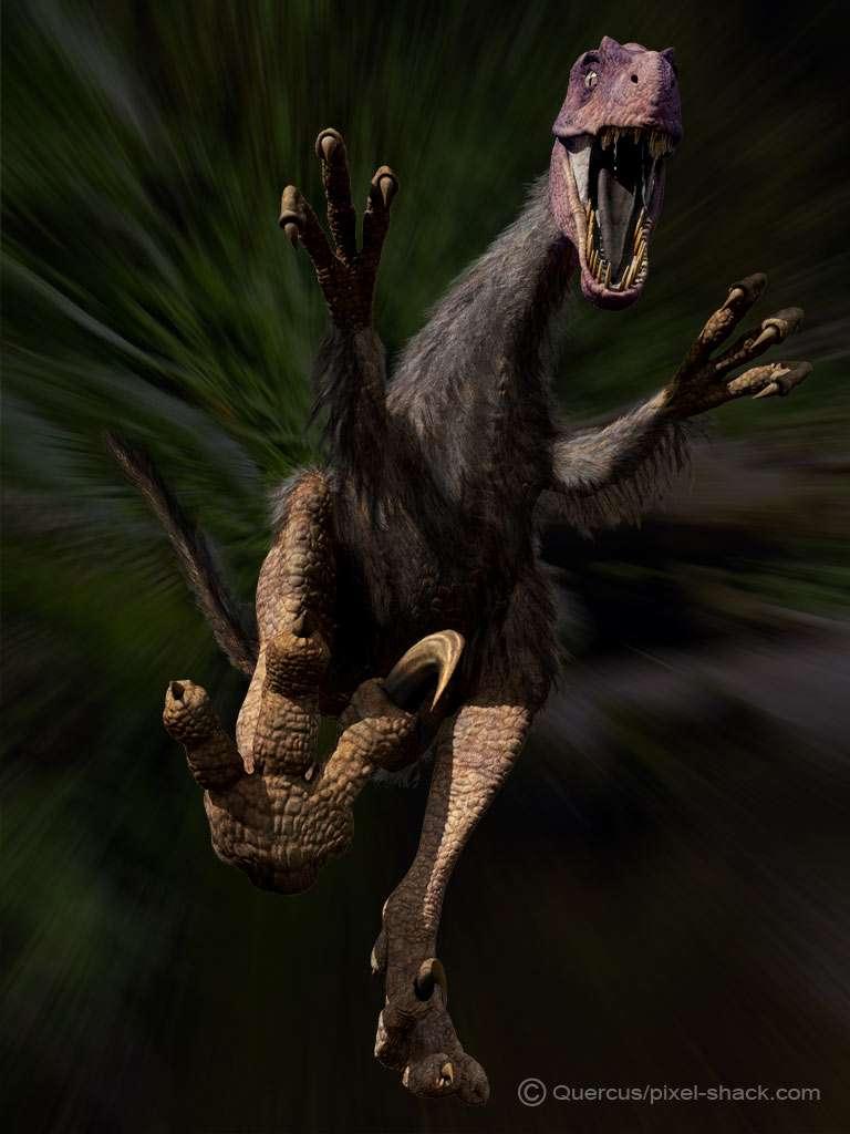 Le vélociraptor et sa griffe rétractile
