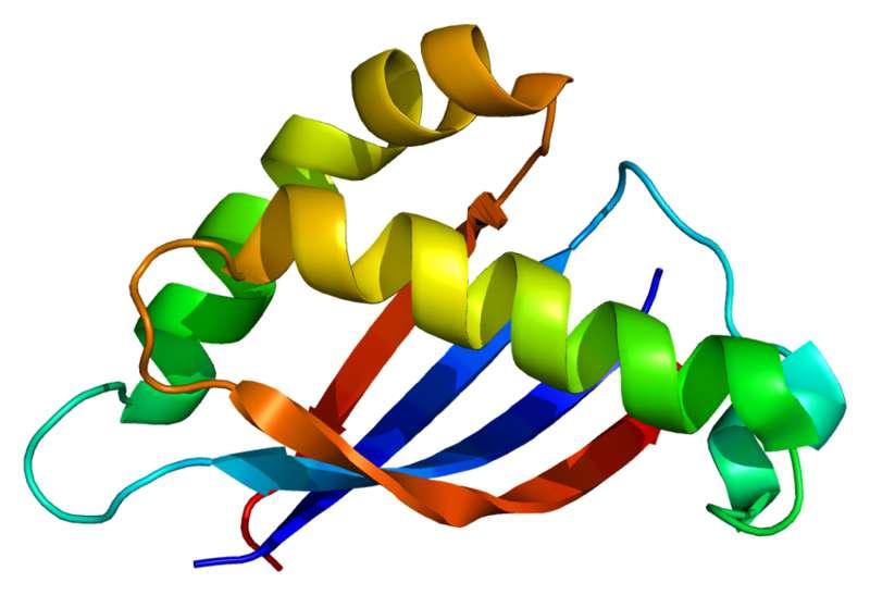 MUC1 est une protéine transmembranaire de grande taille retrouvée dans de nombreuses cellules épithéliales sous forme glycosylée. Elle comporte un site de clivage dans sa partie extracellulaire qui lui permet d'intégrer le mucus. Ici, on peut voir sa structure tridimensionnelle. © emw, Wikipédia, cc by sa 3.0