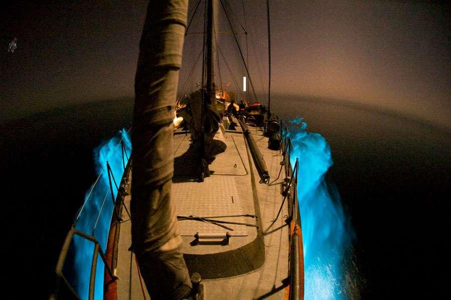 Tara surfant sur du plancton