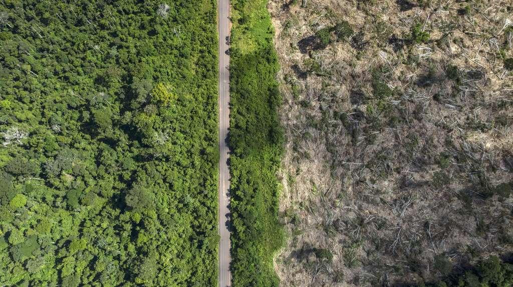 Une zone récemment déboisée en plein cœur de l'Amazonie. © Marizilda Cruppe, Rede Amazônia Sustentáve