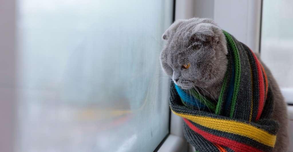 De manière générale, un chat aura tendance à s'adapter lui-même aux conditions météorologiques. S'il est sensible au froid, il préfèrera probablement rester à l'intérieur pendant l'hiver. © banzaygelo, Fotolia