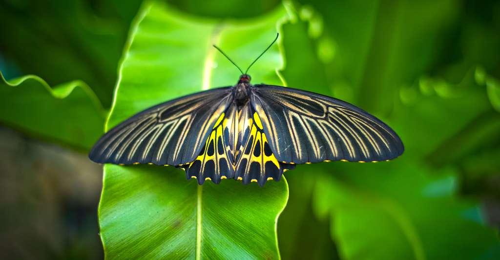 Tout savoir sur les papillons. © Patiwit Hongsang - Shutterstock