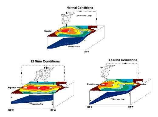 En conditions normales (Normal Conditions, image du haut), la circulation de Walker (Convective Loop) est caractérisée par une zone de convection atmosphérique à l'ouest du bassin et une zone sèche à l'est du bassin. Durant un événement El Niño (en bas à gauche), la zone de convection se trouve dans le centre du Pacifique. Le réchauffement océanique du Pacifique actuel suggère que la zone d'eau chaude, ou warm pool, serait constamment plus centrée dans le Pacifique, induisant des conditions El Niño permanentes. © NOAA