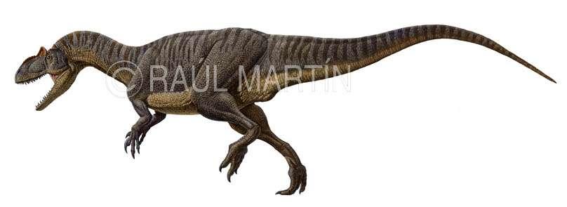 Allosaure, un énorme carnivore