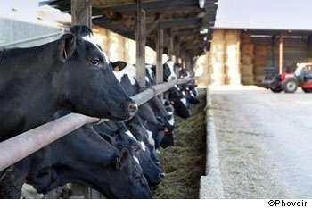 On utilise encore trop d'antibiotiques dans les élevages ! © Phovoir