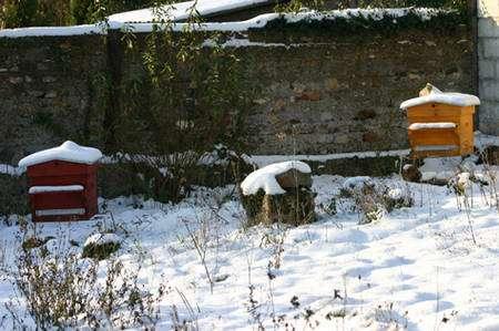 Ruches en hiver. © Bernard Nomblot, DR