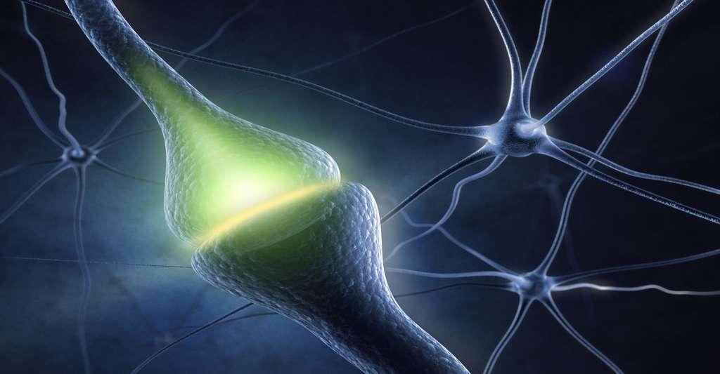 Système neuronal. © Sashkin, Shutterstock
