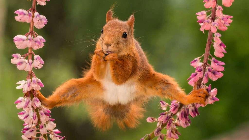 L'écureuil équilibriste