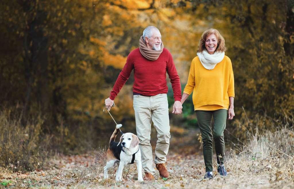 Pour limiter les risques de développer la maladie d'Alzheimer, les médecins recommandent de l'exercice physique régulier. Une raison de plus de ne pas n'hésiter à sortir votre chien du jardin… © Halfpoint, Adobe Stock