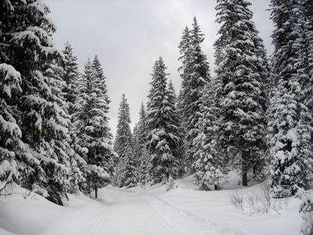 La forêt du Risoux. © DR
