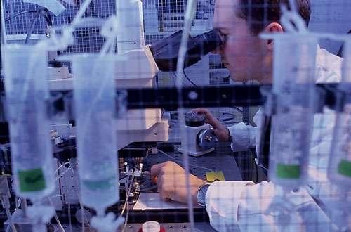 Poste de patch-clamp, mise en place d'une coupe de cerveau de souris sous microscopie avant la mise en place des électrodes. L'objectif de cette expérience est le contrôle nerveux de l'homéostasie énergétique et de la prise alimentaire, et l'identification de son dysfonctionnement dans les pathologies métaboliques (obésité, diabète). © CNRS Photothèque / PERRIN Emmanuel