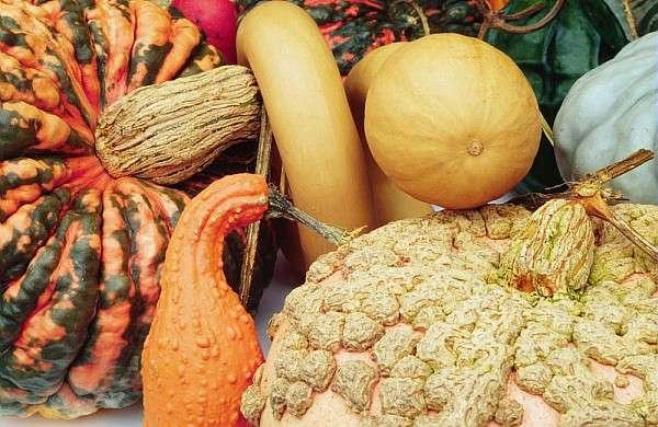 Cucurbitacées : les légumes d'Halloween