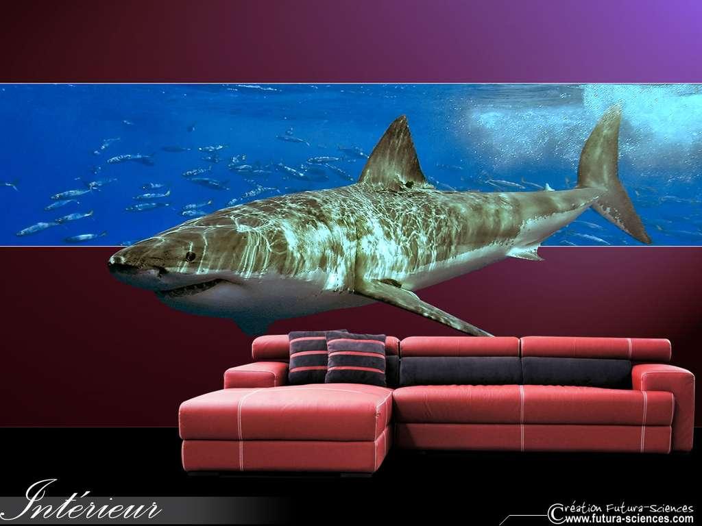 Salon requin
