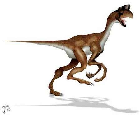 Oviraptor. Ce dinosaure, comme tous les oviraptorosauriens, possédait des plumes et était vraisemblablement omnivore. Plusieurs auteurs affirment qu'ils étaient plus proches des oiseaux que l'archéoptéryx, mais ils ont tous disparu à la fin du Crétacé. Crédit : LeCire (Commons)