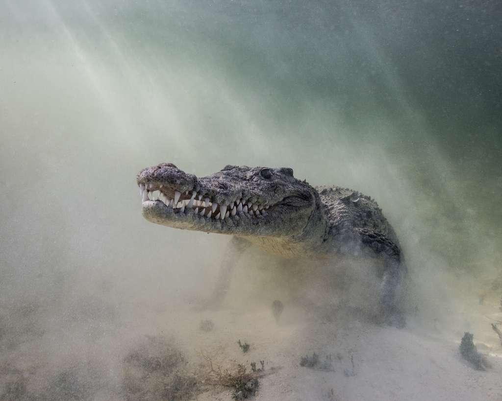 « Les crocs dans la poussière ». © Christina Barringer, Ocean Art Competition 2018