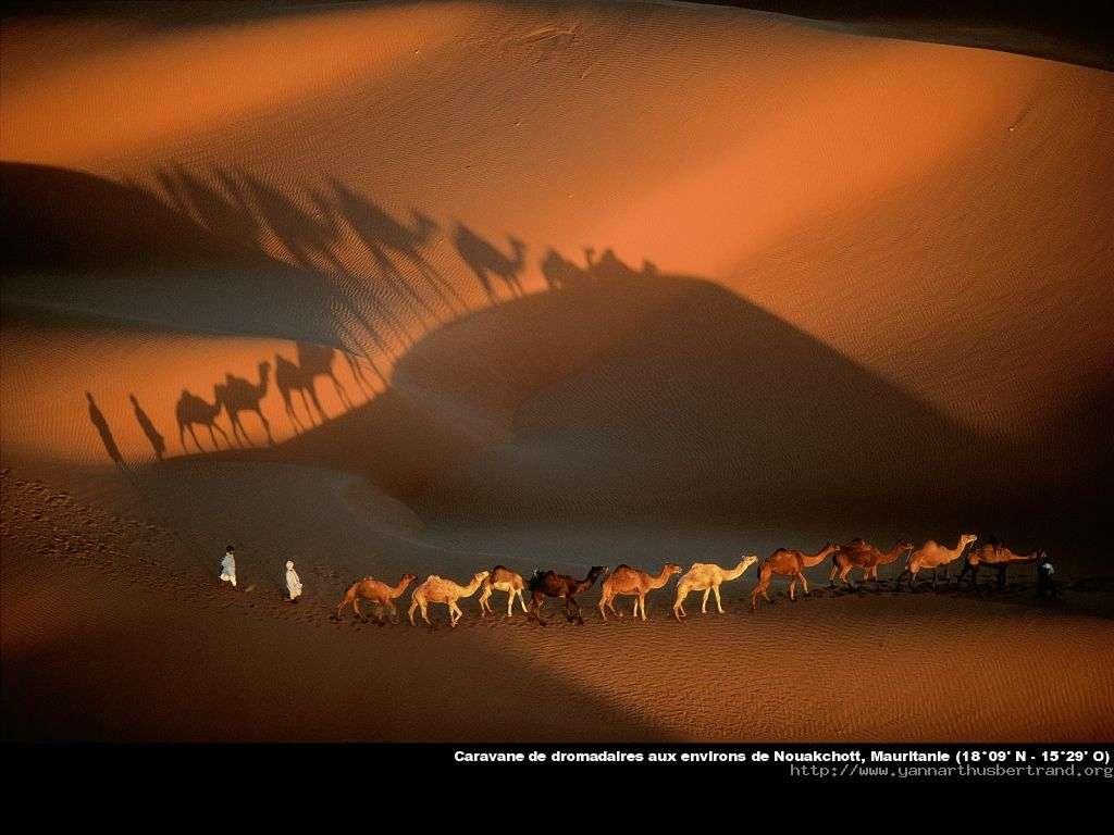 Mauritanie - Caravane de dromadaires aux environs de Nouakchott