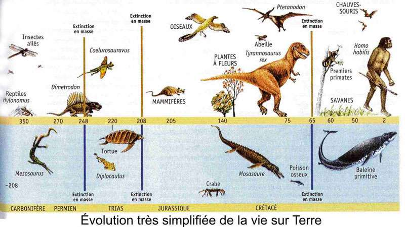 Quelle est la façon de datation des fossiles