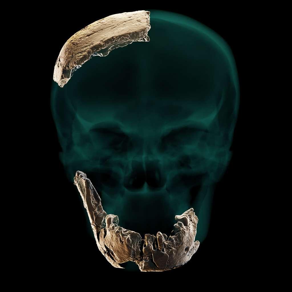 Restes osseux appartenant à Homo Nesher Ramla et découverts en Israël. © Université de Tel Aviv