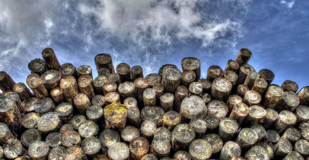 Tronc d'arbres. © Skitterphoto CCO