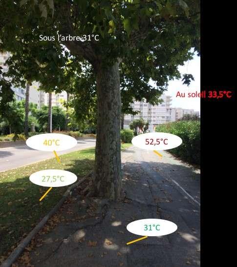 Au centre-ville de Toulon (Var), l'herbe au soleil est à 40 °C et le bitume au soleil à 52,5 °C, alors qu'à l'ombre de l'arbre, les températures de surface sont respectivement de 27,5 °C et 31 °C. © Le Grec, Acterra et al., 2018