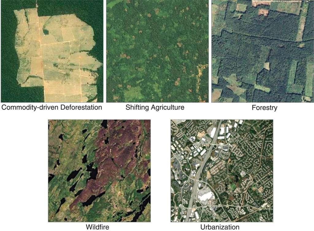 Exemples d'échantillons utilisés pour entraîner l'algorithme à classifier les types de déforestation. © Philip G. Curtis et al., Science, Sep 2018.
