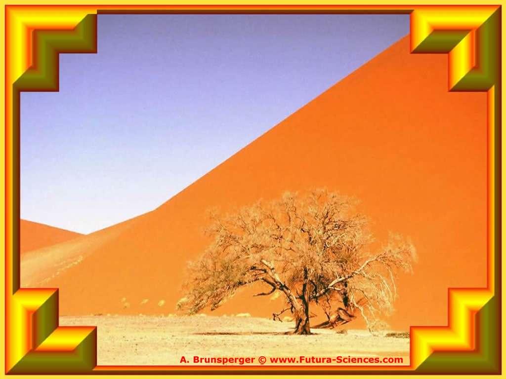 L'arbre de sable