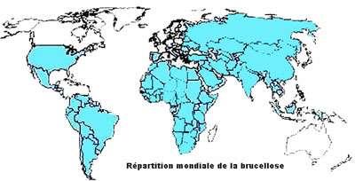 Carte de répartition de la brucellose chez les ruminants http://www.microbes-edu.org