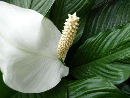 Quelle température pour ma plante ? © Flickr, CC by-nc-sa 2.0