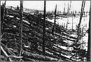 Photographie prise en 1927. Les arbres ont été calcinés et couchés par le souffle. © DR