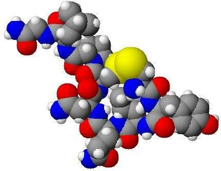 L'ocytocine, dont on peut voir ici une représentation tridimensionnelle, a été découverte en 1906. Cette hormone pourrait améliorer les liens sociaux des personnes autistes, y compris par administration nasale. © fvasconcellos, DP