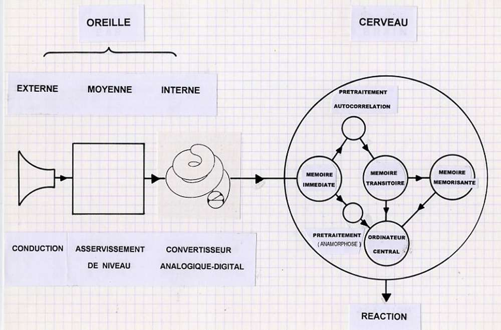 La chaîne de communication auditive (d'après E. Leipp). © DP