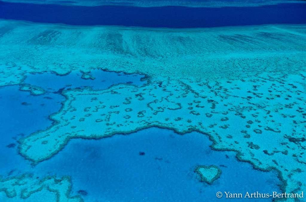 Le récif Hardy, un joyau de la Grande Barrière de corail