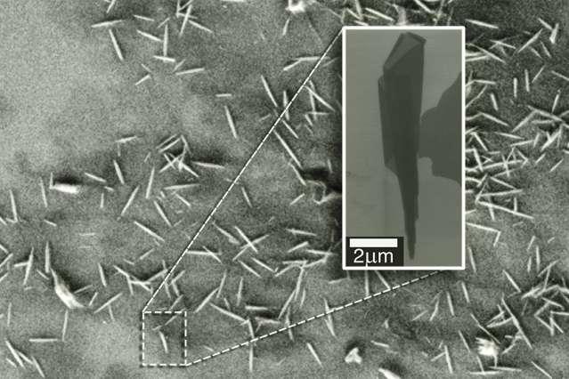Cette image en microscopie électronique montre quelques nanorouleaux d'oxyde de graphène. Le zoom sur la droite révèle la forme conique de ces minuscules rouleaux. © MIT, Havard University