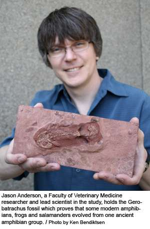 Le fossile Gerobatrachus hottoni tenu par Jason Anderson. Crédit : University of Calgary
