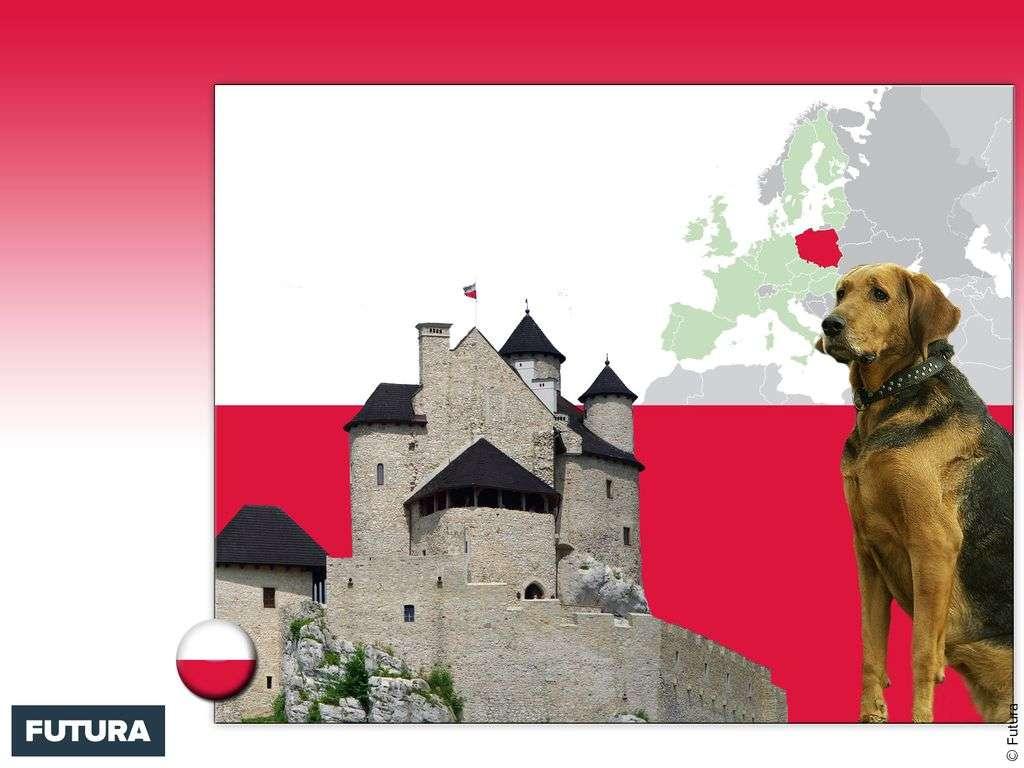 Drapeau : Pologne