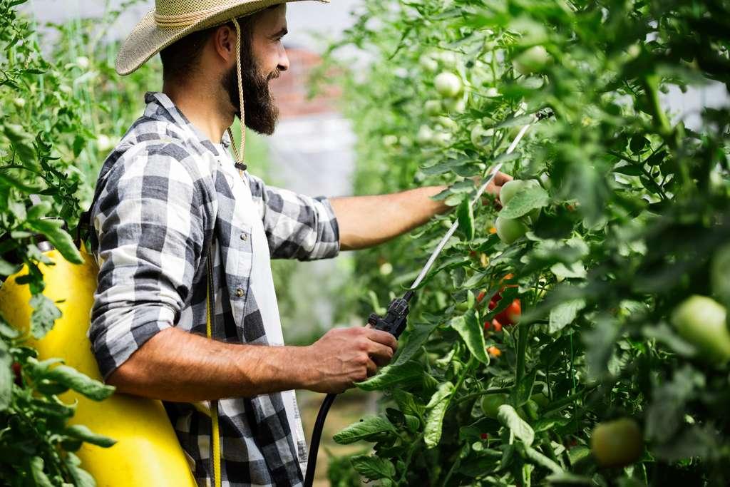 Le bio n'est pas exempt de l'utilisation des pesticides. Son cahier des charges autorise la présence de pesticides naturels. © nd3000, Adobe Stock