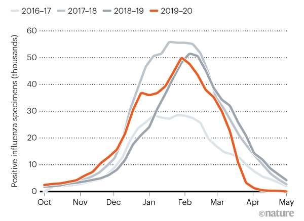 L'épidémie de grippe 2020 a été raccourcie de 6 semaines par rapport aux années précédentes. © Nature