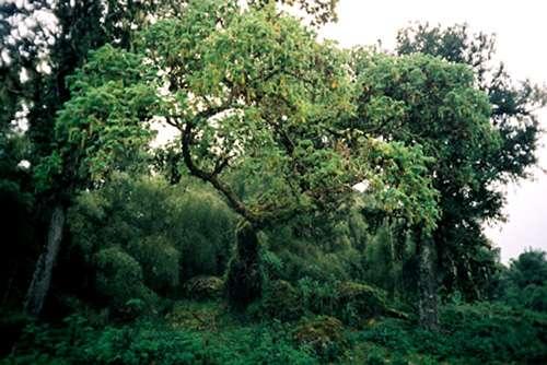Forêt équatoriale au Kenya. © C C A-Share Alike 2.5