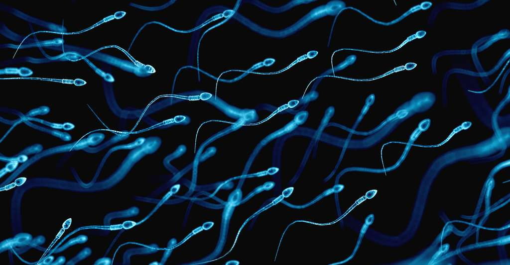 Il est encore trop tôt pour affirmer que la Covid-19 peut altérer le système reproductif masculin. © Sebastian Kaulitzki, Shutterstock
