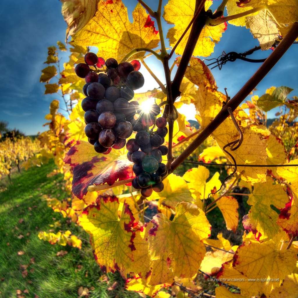 En 2010, la France comptait 788.000 hectares de vignes exploités par 87.400 agriculteurs. © Laures73, Flickr, cc by nc sa 2.0