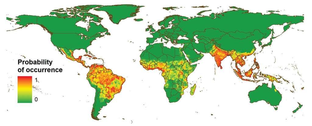 Cette carte présente la probabilité d'occurrence de la dengue dans le monde. Plus on tend vers le rouge, plus elle est élevée. L'Inde est le pays le plus touché au monde. L'Occident, en revanche, semble bien épargné. © Simon Hay et al., Nature