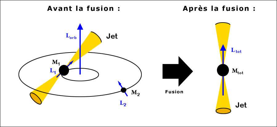 Un trou noir de Kerr supermassif de masse M1 accumule (accrète) de la matière tout en possédant un moment cinétique propre (spin) L1 et un moment orbital Lorb. Des jets de matière sont émis lorsqu'il absorbe du gaz, par exemple celui d'une galaxie plus petite. Le petit trou noir supermassif M2, de moment cinétique L2, de la petite galaxie s'approche et forme un trou noir binaire qui va fusionner avec le premier. De l'énergie est en effet émise sous forme d'ondes gravitationnelles comme dans le cas d'un pulsar binaire, diminuant sans cesse la distance entre eux. La fusion finale forme un trou noir mais la somme des moments cinétiques restants (les ondes gravitationnelles emportent aussi du moment cinétique), associée à celui du trou noir final, change l'axe de rotation et donc la direction d'émission des jets de matière. Crédit : Christian Zier