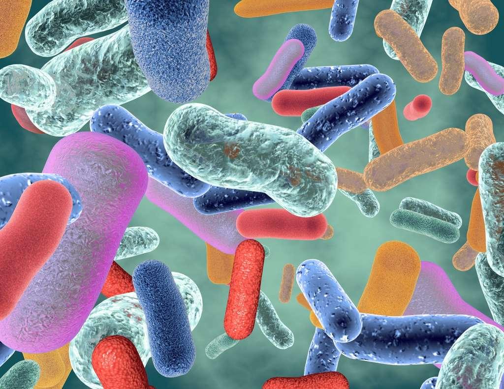 Le microbiote n'a pas encore révélé tous ses secrets © picture-waterfall, Adobe Stock