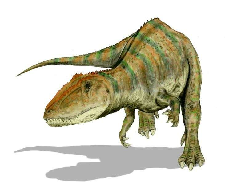 Reconstitution d'un Carcharodontosaurus saharicus. © Nobu Tamura, GNU Free Documentation License version 1.2