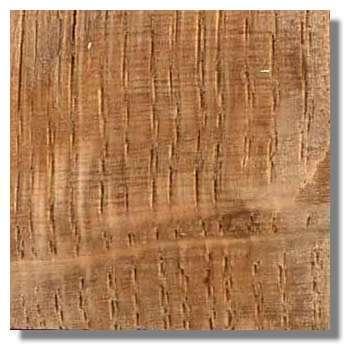 Figure 17. Coupe longitudinale tangentielle de bois de chêne. Les gros vaisseaux verticaux du bois de printemps des différents cernes apparaissent nettement. Ils sont discontinus car la section n'est pas parfaitement longitudinale. Les rayons du bois apparaissent sous forme de stries perpendiculaires aux vaisseaux (champs de croisement). © Photo R. Prat